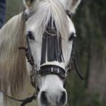 Reiten - Riding - Montar